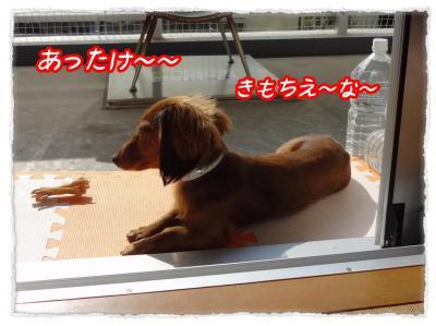2011_11_17_10_convert_20111117222843.jpg