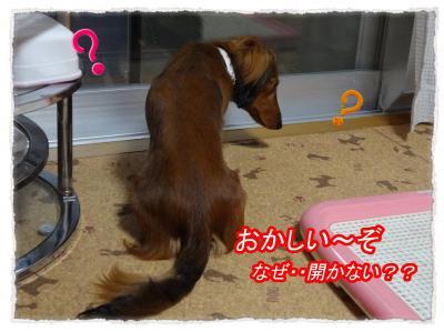 2011_11_17_2_convert_20111117221222.jpg