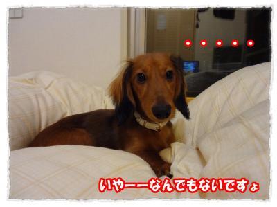 2011_11_1_3_convert_20111101182740.jpg