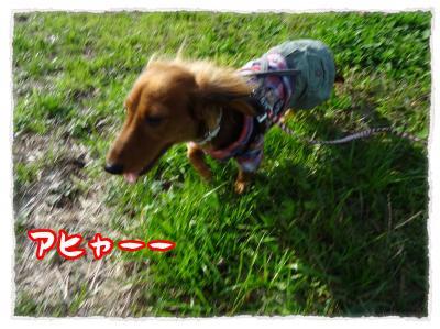2011_11_20_8_convert_20111120230419.jpg