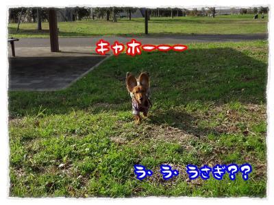 2011_11_20_9_convert_20111120230445.jpg