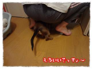 2011_11_21_7_convert_20111121231924.jpg