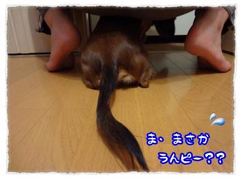 2011_11_21_8_convert_20111121231943.jpg