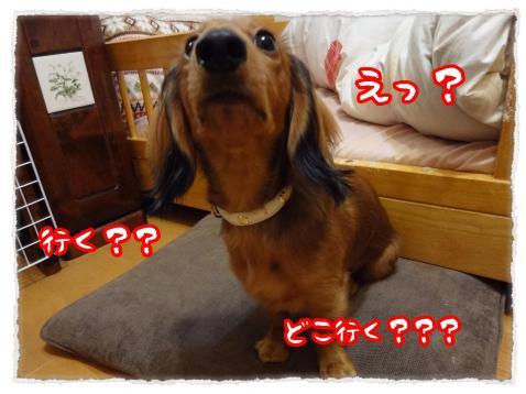 2011_11_22_1_convert_20111122230710.jpg