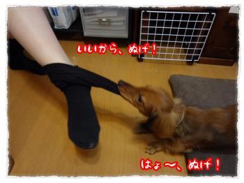 2011_11_22_4_convert_20111122230816.jpg