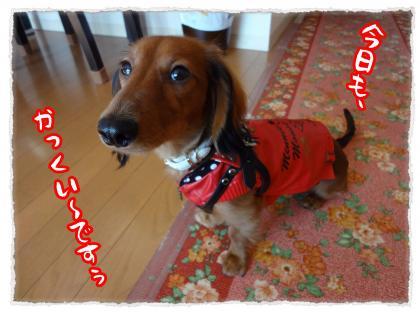 2011_11_23_2_convert_20111123230146.jpg