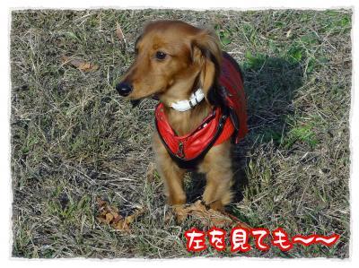 2011_11_23_5_convert_20111123230254.jpg