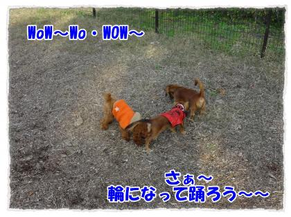 2011_11_23_7_convert_20111123230339.jpg