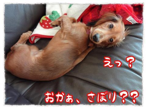 2011_11_24_1_convert_20111124215933.jpg