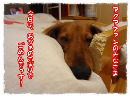 2011_11_24_4_convert_20111124220212.jpg