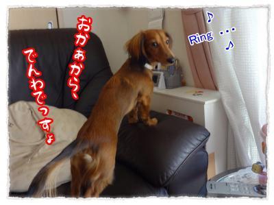 2011_11_25_4_convert_20111125204455.jpg