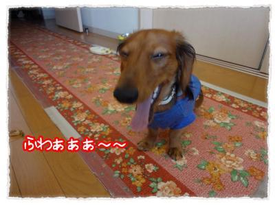2011_11_26_1_convert_20111126225835.jpg