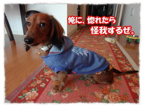 2011_11_26_5_convert_20111126225957.jpg