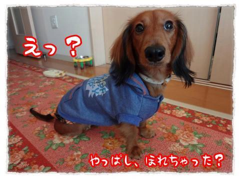 2011_11_26_6_convert_20111126230025.jpg