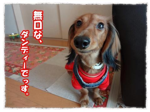 2011_11_27_10_convert_20111127223841.jpg
