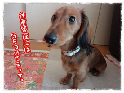 2011_11_27_5_convert_20111127223653.jpg