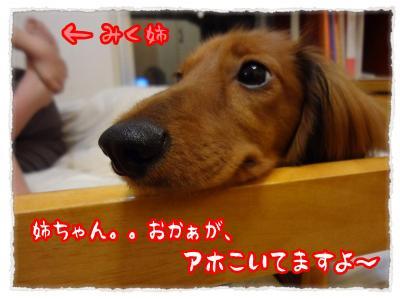 2011_11_28_4_convert_20111128231748.jpg