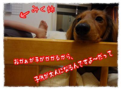 2011_11_28_5_convert_20111128231805.jpg