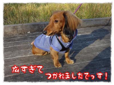 2011_11_29_3_convert_20111129212134.jpg