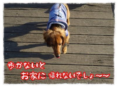 2011_11_29_4_convert_20111129212205.jpg