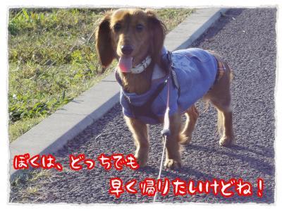 2011_11_29_5_convert_20111129212254.jpg