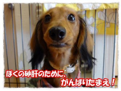 2011_11_30_1_convert_20111130203603.jpg