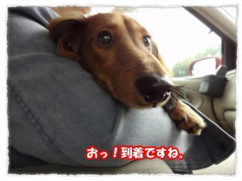 2011_11_5_2_convert_20111105222636.jpg