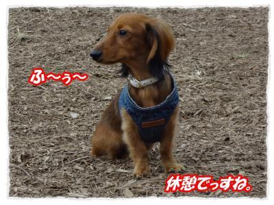2011_11_5_3_convert_20111105222701.jpg