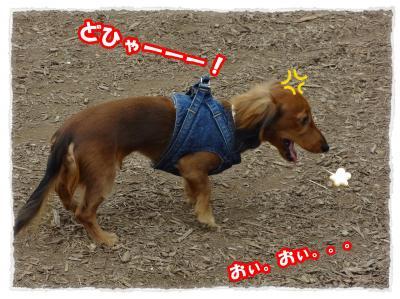 2011_11_5_4_convert_20111105222722.jpg