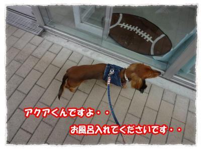2011_11_5_7_convert_20111105222828.jpg