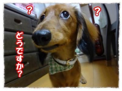 2011_11_5_9_convert_20111105222908.jpg