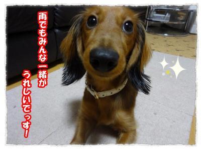 2011_11_6_10_convert_20111106225751.jpg