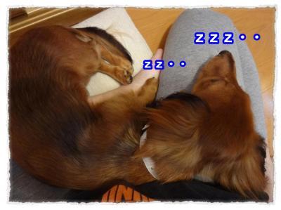 2011_11_6_4_convert_20111106224017.jpg