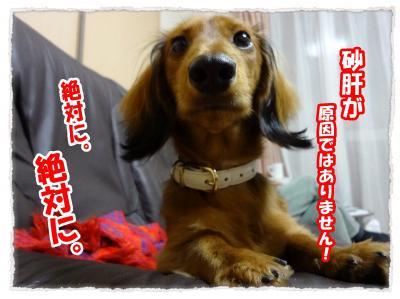 2011_11_8_1_convert_20111108223802.jpg