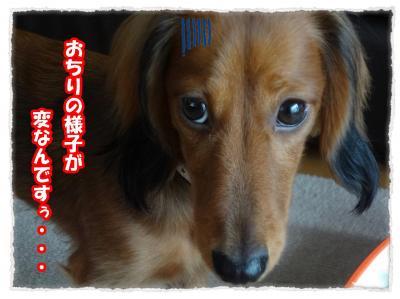 2011_11_8_3_convert_20111108223744.jpg