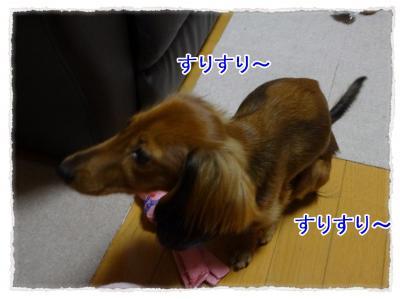 2011_11_8_4_convert_20111108223842.jpg