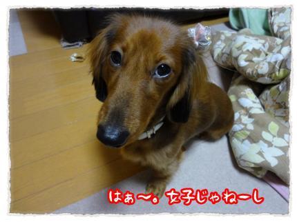 2011_12_10_4_convert_20111210233849.jpg