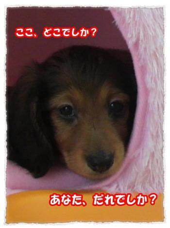 2011_12_12_4_convert_20111212182909.jpg
