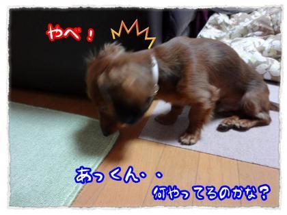 2011_12_14_1_convert_20111214224243.jpg