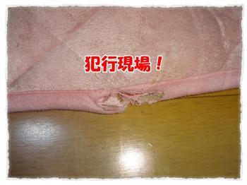 2011_12_14_4_convert_20111214224715.jpg