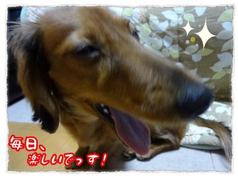 2011_12_16_10_convert_20111216231507.jpg