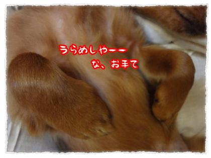 2011_12_18_2_convert_20111218232730.jpg
