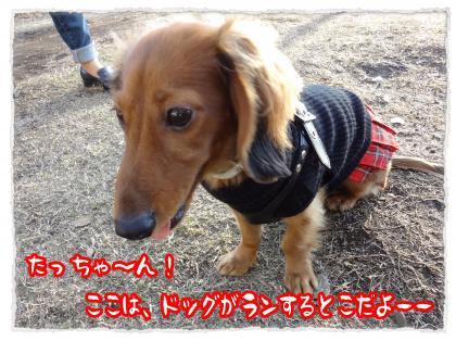 2011_12_19_2_convert_20111219231406.jpg