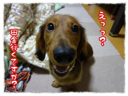 2011_12_22_2_convert_20111222225503.jpg