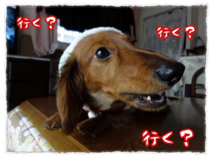 2011_12_24_5_convert_20111224223928.jpg