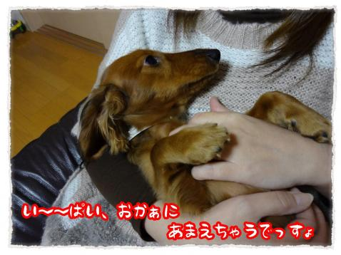 2011_12_27_6_convert_20111227232713.jpg