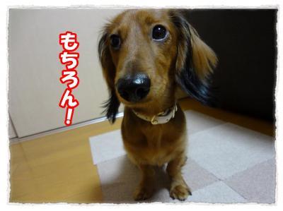 2011_12_2_11_convert_20111202223934.jpg