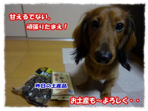 2011_12_2_12_convert_20111202223950.jpg