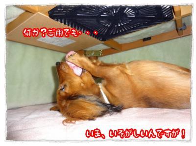 2011_12_2_4_convert_20111202223729.jpg
