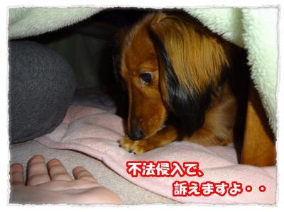 2011_12_2_7_convert_20111202223823.jpg